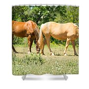 Marble Falls Texas In Good Grass Shower Curtain