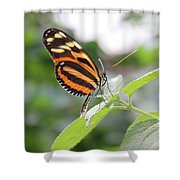 Good Morning Butterfly Shower Curtain