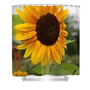Good Morning Sunshine - Sunflower Shower Curtain