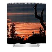 Good Night Trees Shower Curtain