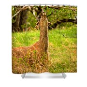 Good To The Last Leaf Shower Curtain