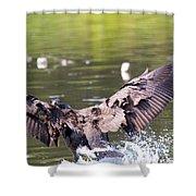 Goose Landing II Shower Curtain