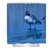 Goose Meeting Shower Curtain