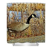 Goose On The Edge Shower Curtain