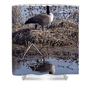 Goose Reflecting On Motherhood Shower Curtain