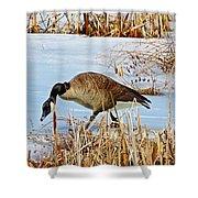 Goose Walking Shower Curtain