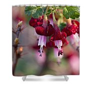 Gooseberry Flowers Shower Curtain