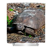 Gopher Turtle Shower Curtain