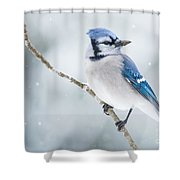 Gorgeous Blue Jay In The Snow Shower Curtain