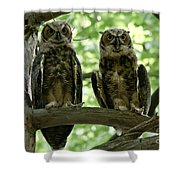 Gorgeous Great Horned Owls Shower Curtain