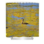 Gorgeous Grebe Shower Curtain