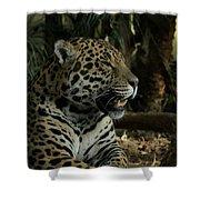 Gorgeous Jaguar Shower Curtain