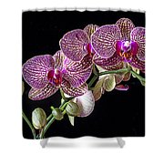 Gorgeous Orchids Shower Curtain