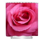 Gorgeous Pink Rose Shower Curtain