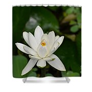 Gorgeous White Lotus Flower Blossom Shower Curtain