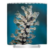 Gorgonian Shower Curtain
