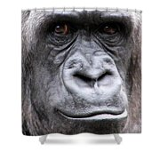 Gorilla - Jackie Shower Curtain