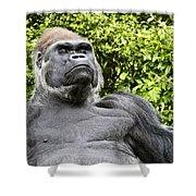 Gorilla Look Shower Curtain