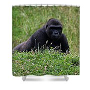 Gorilla On The Hunt Shower Curtain