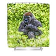 Gorilla Resting Shower Curtain