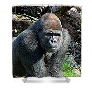 Gorilla135 Shower Curtain