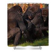 Gorillas Having Fun Together  Shower Curtain