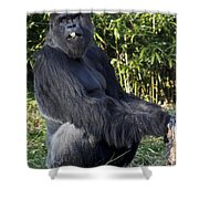 Gorillas In The Mist Shower Curtain