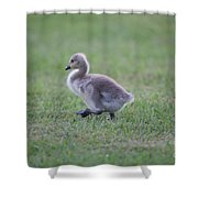 Gosling Stroll Shower Curtain