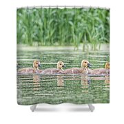 Goslings All In A Row Shower Curtain
