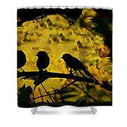 Gossipers Shower Curtain