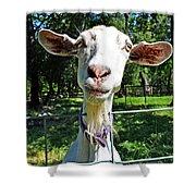 Got Your Goat Shower Curtain