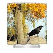 Three Ravens On A Gothic Graveyard Day Shower Curtain