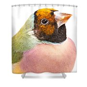 Gouldian Finch Erythrura Gouldiae Shower Curtain