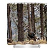 Gould's Wild Turkey IIi Shower Curtain