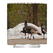 Gould's Wild Turkey Iv Shower Curtain