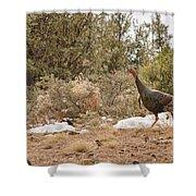 Gould's Wild Turkey Vii Shower Curtain
