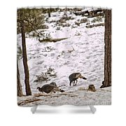 Gould's Wild Turkey Viii Shower Curtain