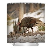 Gould's Wild Turkey Vix Shower Curtain