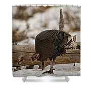 Gould's Wild Turkey Xi Shower Curtain
