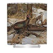 Gould's Wild Turkey Xiii Shower Curtain