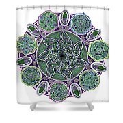 gpm Shower Curtain