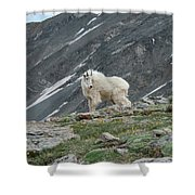 Gq Mtn. Goat Shower Curtain