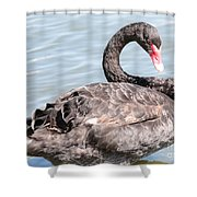 Graceful Black Swan Shower Curtain