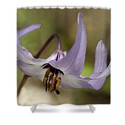 Graceful Fawn Lily Shower Curtain