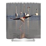 Graceful Flamingo Dance Shower Curtain