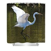 Graceful Great Egret Flying Shower Curtain