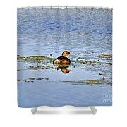 Graceful Grebe Shower Curtain