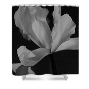 Graceful In Monochrome  Shower Curtain