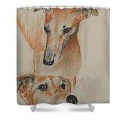 Graciously Greyhound Shower Curtain
