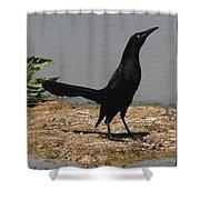 Grackle Posturing Shower Curtain
